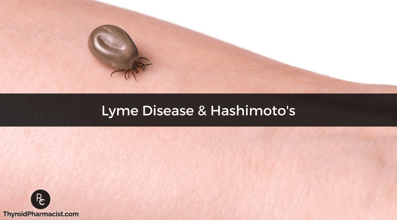 Lyme Disease And Hashimoto S Thyroiditis Dr Izabella Wentz