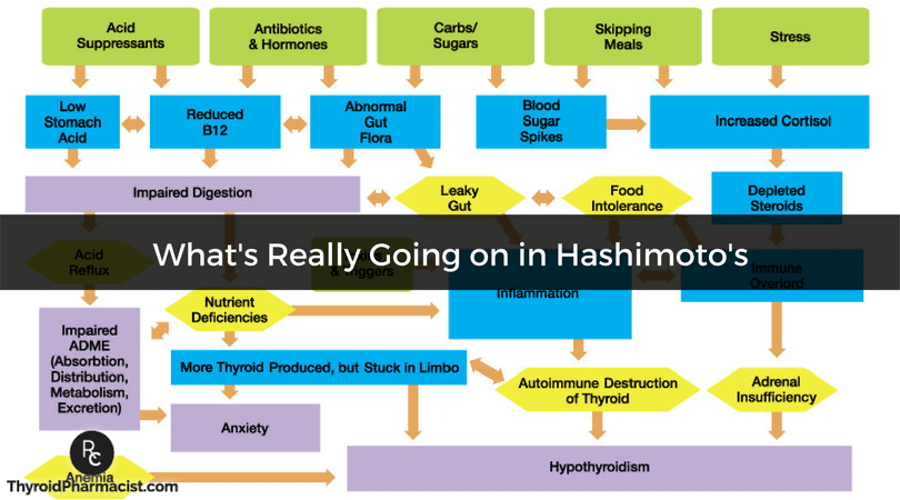What's Really Going on in Hashimoto's?