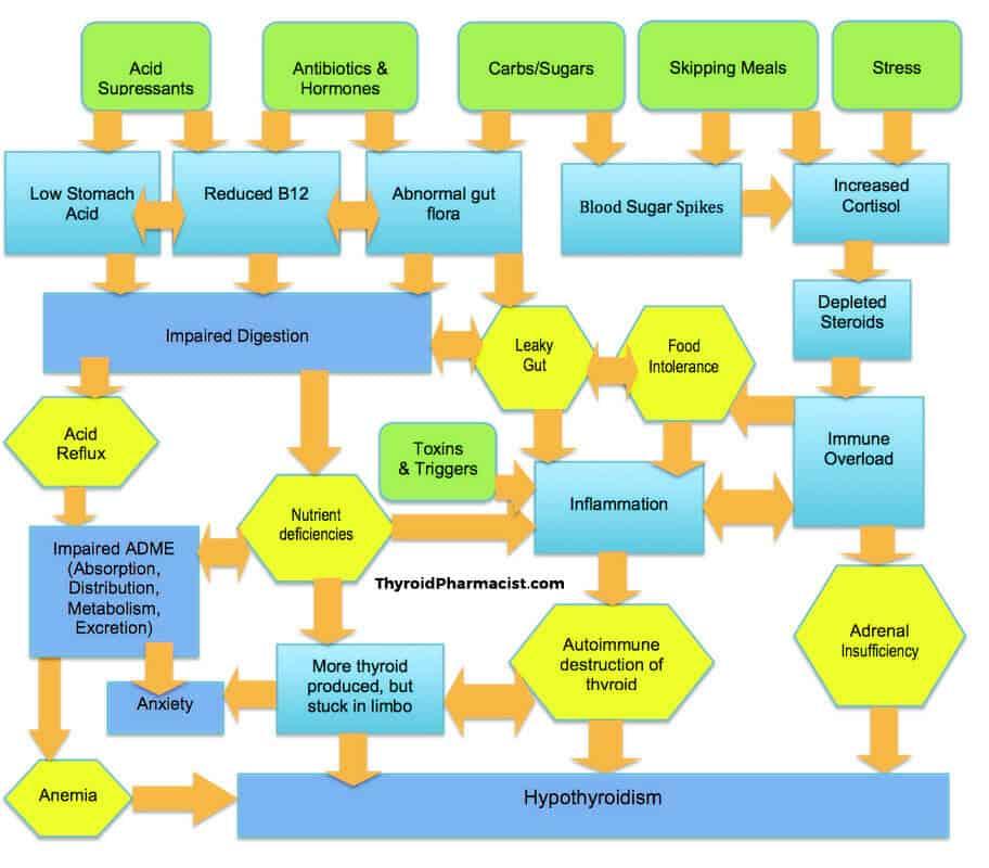 hashimotos flow chart