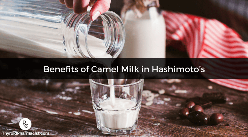 Discover the benefits of camel milk and how it can help Hashimoto's and hypothyroidism.