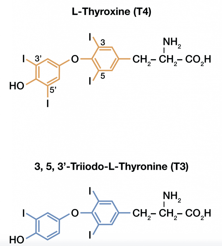 Chemical Structure of T4 & T3