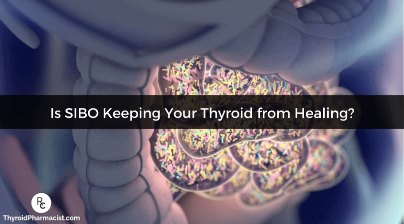 Find out if SIBO is keeping your thyroid & Hashimoto's from healing