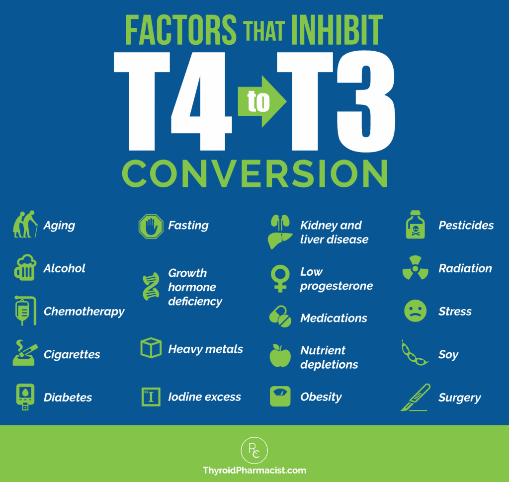 T4 to T3 Conversion Infographic