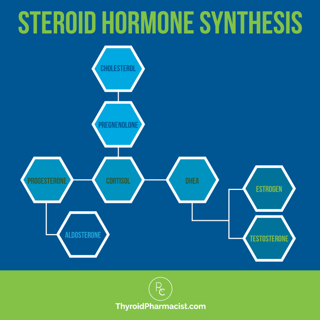 Steroid Hormone Synthesis Infographic