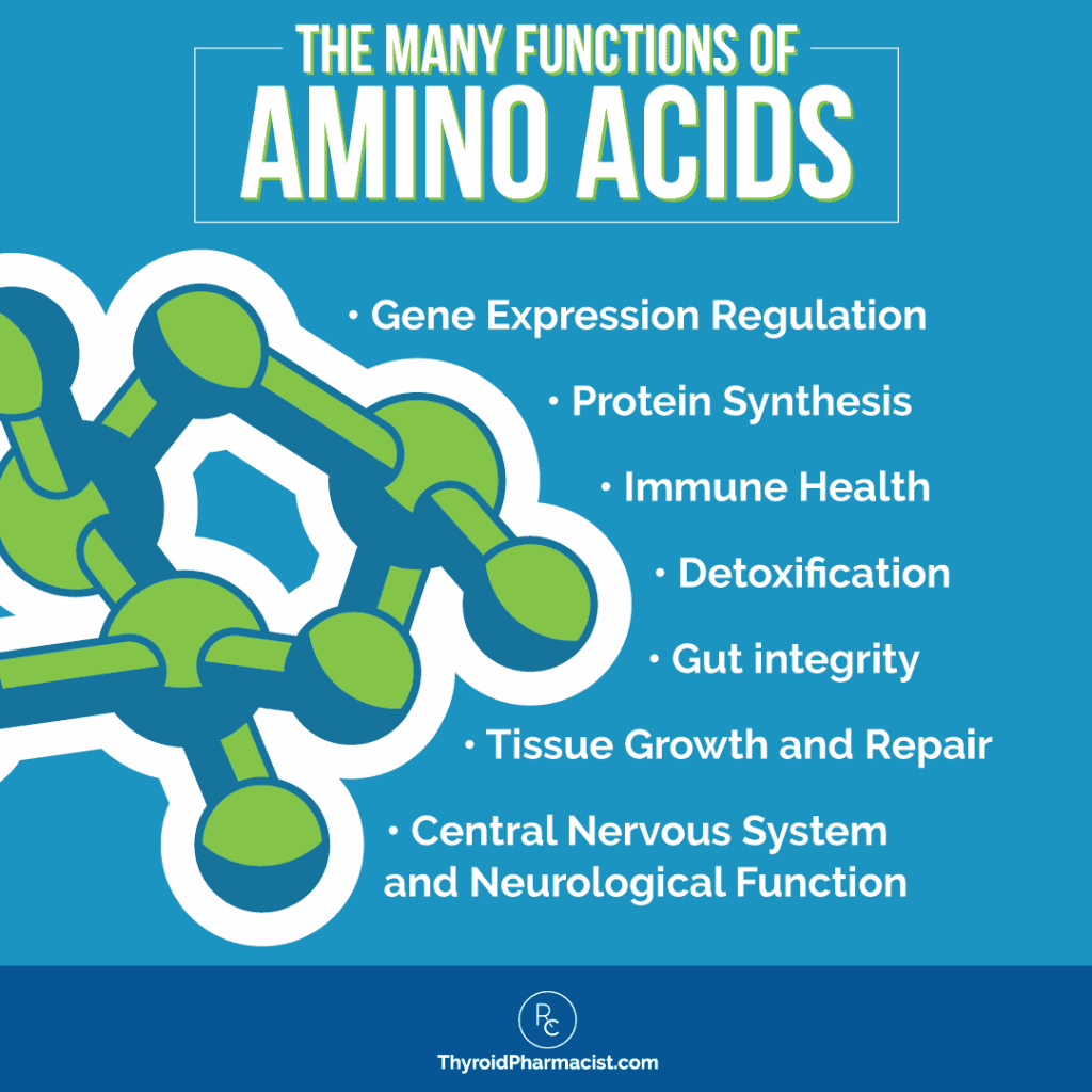 The Many Functions of Amino Acids Infographic