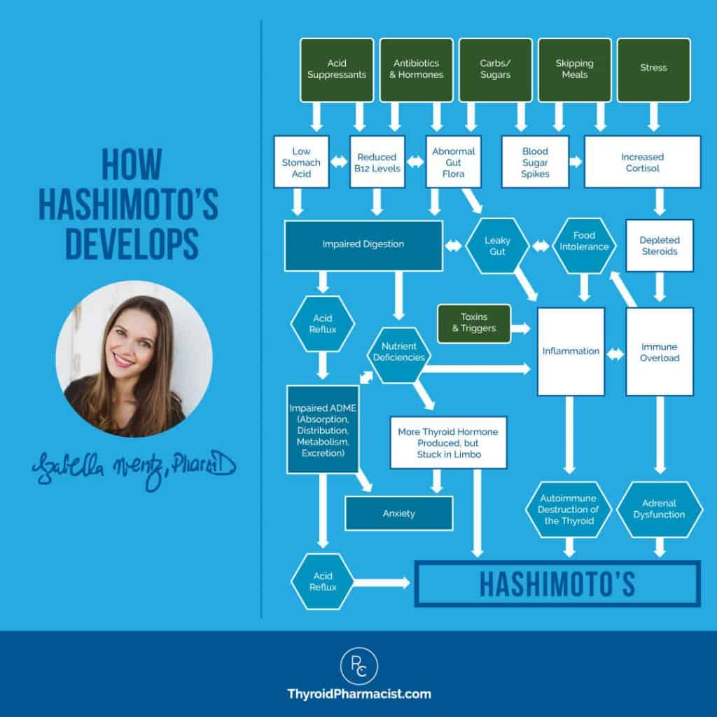 How Hashimoto's Develops Infographic